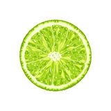 Vector lime slice. Illustration of citrus Stock Photography