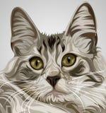 Vector lindo del gato Imagenes de archivo