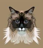 Vector lindo del gato Foto de archivo