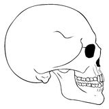 Vector Line Art Side View Skull. On White Background Royalty Free Stock Photography