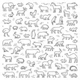 Vector line concept for american, african and australian animals Stock Photography