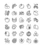 Vector line icon collection. Fruits, berries and nuts. Healthy v Royalty Free Stock Photos
