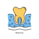 Linear isolated icon - Molar icon. Vector linear colored isolated icon of yellow tooth in blue gum - molar Stock Photography