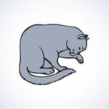 Vector linear drawing. Cute kitten carefully washes Stock Photo