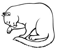 Vector linear drawing. Cute kitten carefully washes royalty free illustration