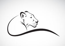 Vector of a lion female design on white background. Stock Photos