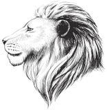 Vector lions head, illustration. Lion`s hand drawn profile. Stock Photo