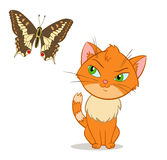 Vector little kitten with beauty butterfly Royalty Free Stock Image