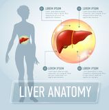 Vector liver infographics banner illustration Royalty Free Stock Photo