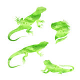 Vector lizard iguana watercolor set vector Stock Image