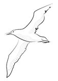 Vector llustration sketch style seagull Royalty Free Stock Photo