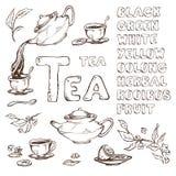 Vector lo schizzo degli oggetti per la cerimonia di tè Teiera e tazze, limone I nomi la fonte disegnata varietà differenti Immagine Stock Libera da Diritti