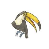 Vector lo schizzo strutturato variopinto disegnato a mano del tucano su un fondo bianco Uccello tropicale esotico luminoso Isolat Immagini Stock Libere da Diritti