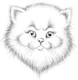 The Vector logo cat for T-shirt royalty free stock images