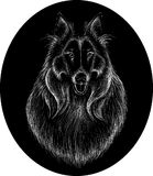 The Vector logo Collie  dog Royalty Free Stock Image