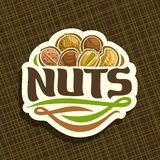 Vector logo for Nuts. Cut sign with pile of healthy walnut, australian macadamia nut, sweet almond, forest hazelnut, cracked pistachio, peanut in nutshell, veg Stock Photography