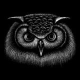 The Vector logo owl for T-shirt design or outwear. royalty free stock image