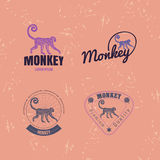 Vector logo set with Jungle Monkey Stock Photos
