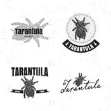 Vector logo set with Tarantula spider Royalty Free Stock Image