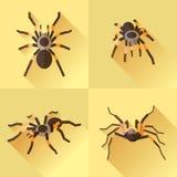 Vector Long Shadow Flat Set Tarantola. Vector Long Shadow Flat Spider Set Tarantola Vector Illustration