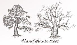 Vector los altos árboles detallados dibujados mano para el diseño libre illustration