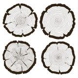 Vector los anillos de árbol y el sistema del tronco del corte de la sierra stock de ilustración
