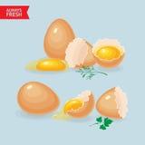 Vector los ejemplos con los huevos, yemas de huevo, cáscaras de huevo Foto de archivo libre de regalías