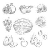Vector los iconos del bosquejo de las frutas exóticas y del jardín stock de ilustración