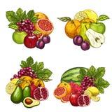 Vector los iconos del bosquejo del manojo exótico de las frutas del jardín libre illustration