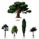 Vector los tipos dibujados mano colección verde del estilo del bosquejo del árbol de las copas del pino del bosque del abedul, ce ilustración del vector
