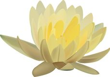 Vector of Lotus Royalty Free Stock Photography