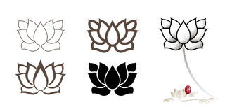 Vector lotus flower sets. Vector Chinese lotus flower sets Royalty Free Stock Image