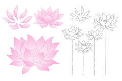 Vector lotus flowers Stock Images