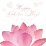 Vector lotus flowers Stock Image