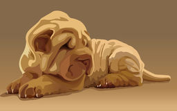Vector lovely puppy. A small shar pei puppy Royalty Free Stock Photography