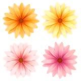 Vector madeliefjebloemen geplaatst die op wit worden geïsoleerdg vector illustratie