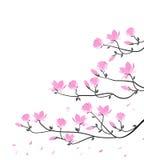 Vector magnolia flowers Stock Photos