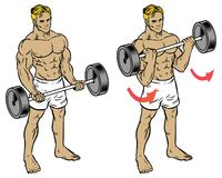Male fitness workout doing barbell durl to train the bicep. Vector of male fitness workout doing barbell durl to train the bicep Stock Images