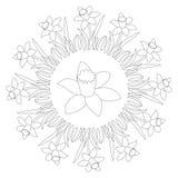 Vector a mandala redonda preto e branco da mola com narciso amarelo da flor - página adulta do livro para colorir Imagem de Stock Royalty Free