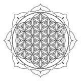 Vector mandala sacred geometry illustration. Vector contour monochrome design mandala sacred geometry illustration flower of life lotus isolated white background Stock Photography
