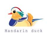 Vector mandarin duck Royalty Free Stock Images