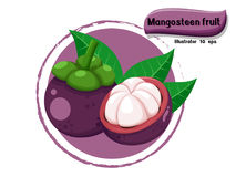 Vector Mangosteen fruit isolated on color background,illustrator 10 eps Royalty Free Stock Image