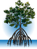 Vector mangrove plants royalty free illustration