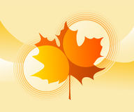 Vector Maple leaf Stock Images