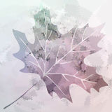 Vector maple leaf Royalty Free Stock Image
