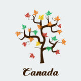 Vector maple tree. Vector format eps 10. Flat colors Stock Image