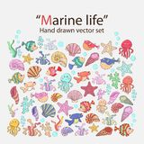 Vector marine life Royalty Free Stock Photos