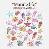 Vector marine seaweed,shells Royalty Free Stock Image