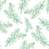 Marjoram branch with leaf seamless pattern. Vector marjoram branch with leaf seamless pattern.  Hand drawn herbal spice. Engraving illustration for ads Stock Photography
