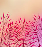 Vector meadow grass Royalty Free Stock Photography
